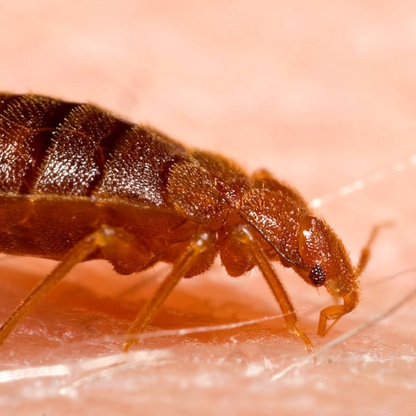 Bed Bug Control In Tulsa OK