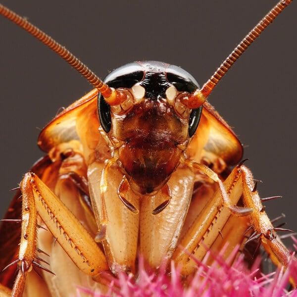 Cockroach Control In Tulsa OK