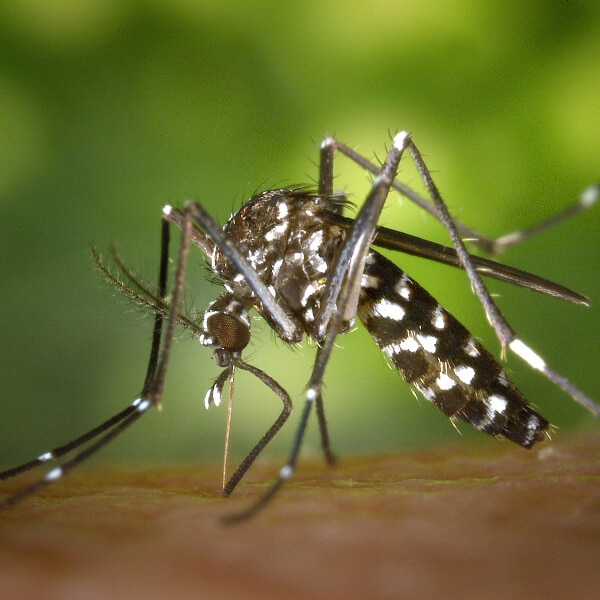 Mosquito Control In Tulsa OK